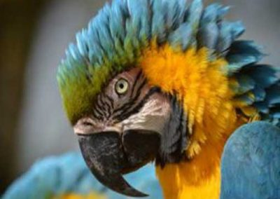 Tropical-Bird